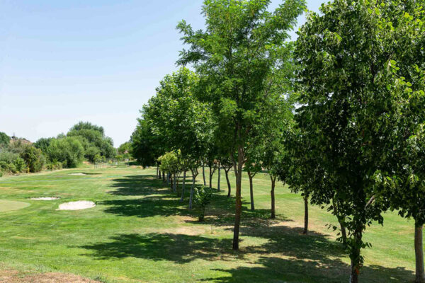 golf-el-maderal