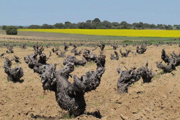 tierra-del-vino-2